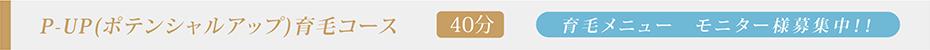 P-UP(ポテンシャルアップ)育毛コース